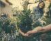 jardinage-entre-amis-1080x675